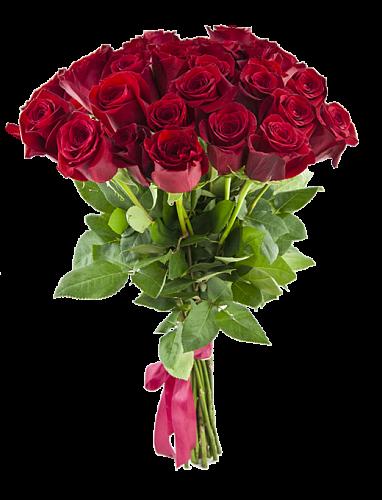 rose_23
